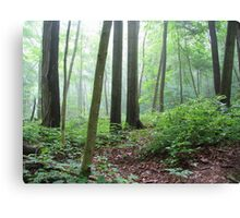Into the Misty Wild Forest Canvas Print