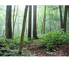 Into the Misty Wild Forest Photographic Print