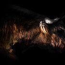 Highland Cow by Ian Hufton