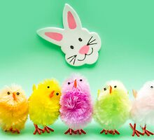 Easter Chicks and Rabbit by MMPhotographyUK