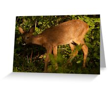 Spring Gardens Deer 1 Greeting Card