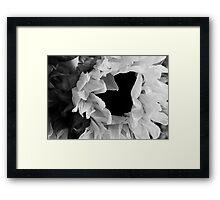 Sunflower 1 Black and White Framed Print