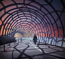 A tangled web we weave by Adrian Donoghue