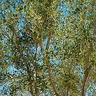 Olive Branches and Sky by Robert Meyers-Lussier