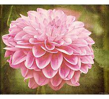 Beauty Awakens Vintage Art Photographic Print