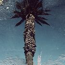 Palm in a puddle by iamelmana