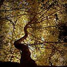 Sunshine Sensation by Martice