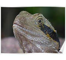 Male Water Dragon Lizard Poster