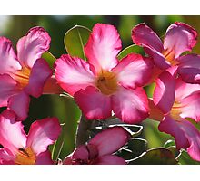 spring - primavera Photographic Print