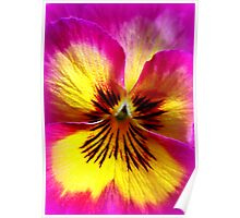 Pansy Beauty Poster