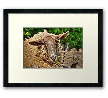Seepish Looks Framed Print