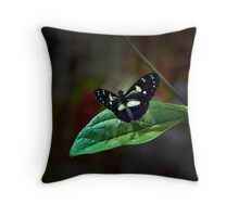 Black Mindo Flutterby Throw Pillow