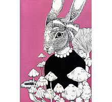 Pink Rabbit  Photographic Print