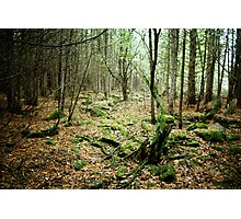 In The Old Wood Photographic Print
