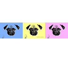 mops puppy trilogy Photographic Print