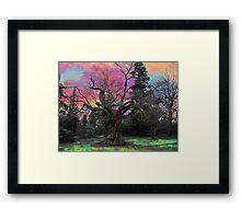 The Magic Wild Wood  Framed Print