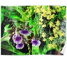 Geyser Jaimie and Golden Fantasy Orchids Poster
