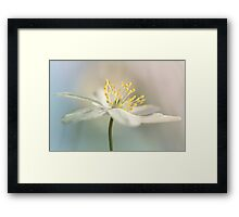 Loveable Wood Anemone... Framed Print