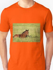horse foal in summer pasture Unisex T-Shirt