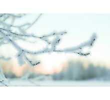 The Bright Side of Winter Photographic Print