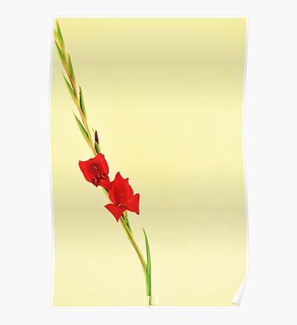 Red Gladiolus Spike Poster