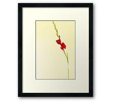 Red Gladiolus Spike Framed Print