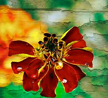 A fave marigold pic by Kelly  McAleer