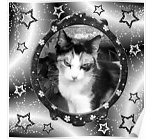 Calico cat in black and white  Poster