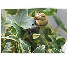 The Snaily and the Ivy Poster