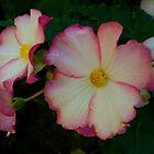 Begonia by Halobrianna