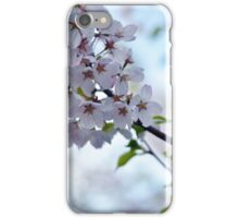 Cherry Blossoms iPhone 5 Case iPhone Case/Skin