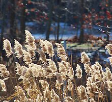 Windy Day at the Nissequogue River by Gilda Axelrod
