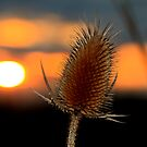 Thistle Sunset by Adam Kuehl