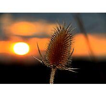 Thistle Sunset Photographic Print