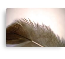 Downy Feather Canvas Print