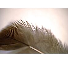 Downy Feather Photographic Print