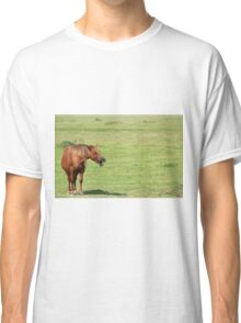 brown horse neigh Classic T-Shirt