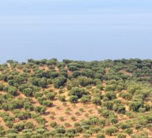 hill with olives trees Sticker