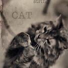 Cat with string by Lynn Starner
