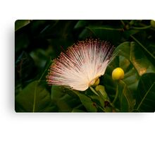 Wild Beach Flower Canvas Print