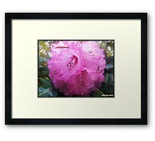 """A National Trust Bloom"" Framed Print"