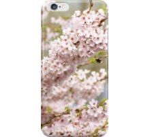 soft spring cherry tree iPhone Case/Skin