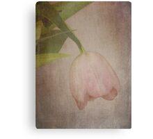 Vintage Textured Tulip Canvas Print