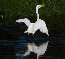 On My Pond by byronbackyard