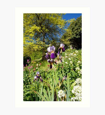 Spring Iris Art Print