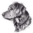 Retriever by Beth Thompson
