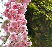 Weeping Cherry Tree by Cee Neuner
