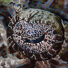 Crocodile Flathead Eye by Mark Rosenstein