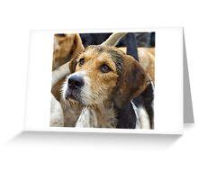 A Welsh Fox Hound Greeting Card