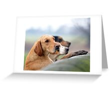 Hounds on a Wall Greeting Card